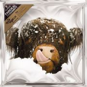 Age UK Pack of 8 Highland Cow in Snow Charity Christmas Cards